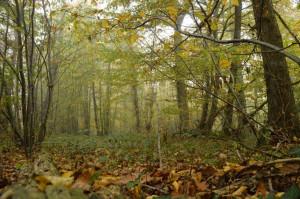 Bois-Brouillard 01XI1679