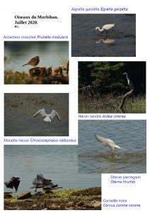 Oiseaux morbihan 1