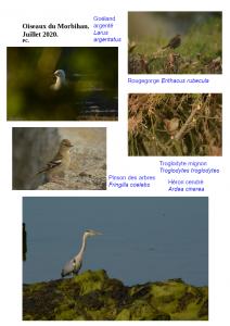 Oiseaux morbihan 2