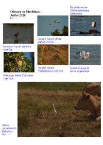 Oiseaux morbihan 3